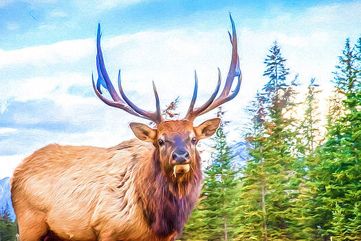 King of the Forest by Judy Wright Lott