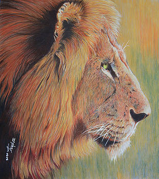 King Of The Jungle by Don MacCarthy