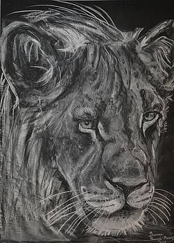 King of the Kruger by Gianna Ferazzi-Mooney