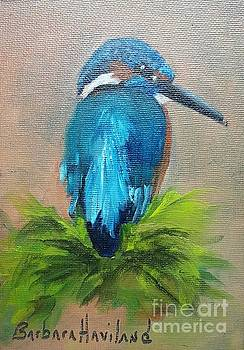 Kingfisher Bird by Barbara Haviland