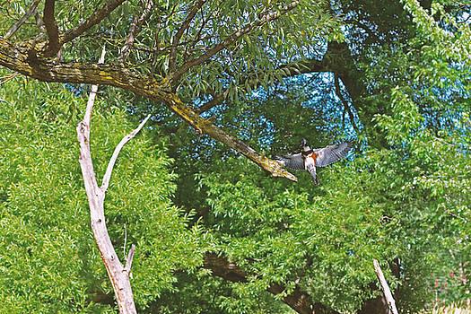 Kingfisher Kingdom by Asbed Iskedjian