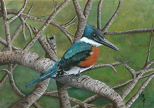 Brazilian Green Kingfisher by Marsha Friedman