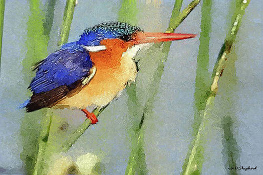 MS  Fineart Creations -  Kingfisher