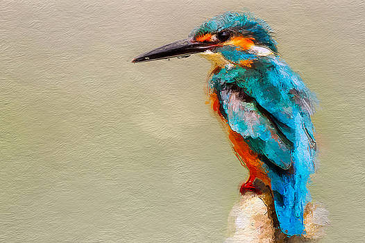 Kingfisher by Suesy Fulton