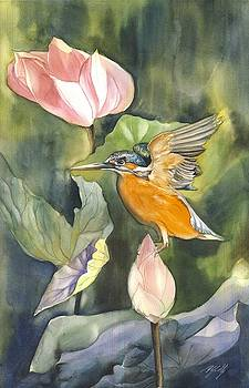Kingfisher with lotus by Alfred Ng