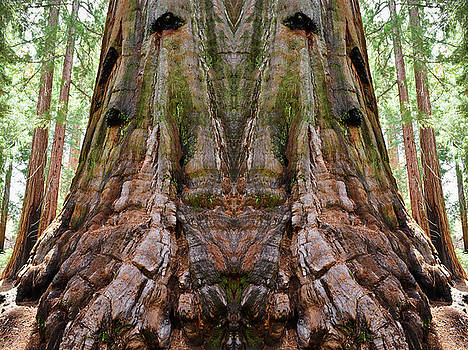 Kings Canyon Giant Sequoia Mirror by Kyle Hanson