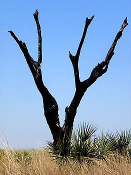 Kissimmee Prairie Lone Burned Tree  by Chris Mercer