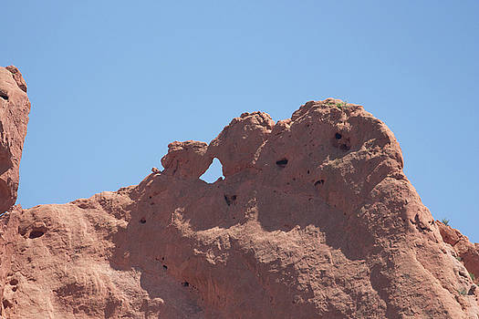 Kissing Camels 2 by Jodi Vetter