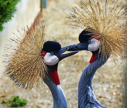 Kissing Cranes by Rick Lawler