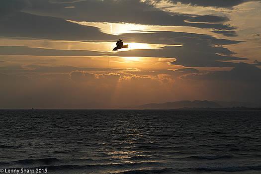 Leonard Sharp - Kite sunset