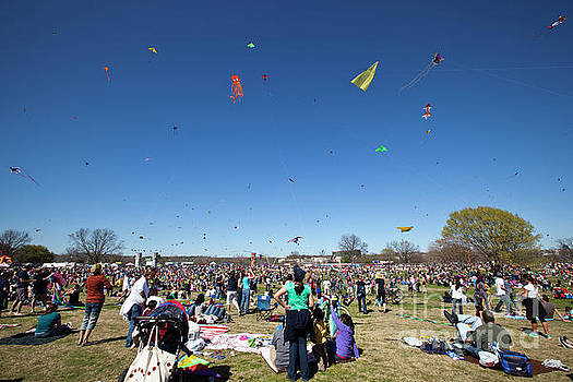 Herronstock Prints - Kites fill the sky above Zilker Park Zilker Park Kite Festival in downtown Austin Texas