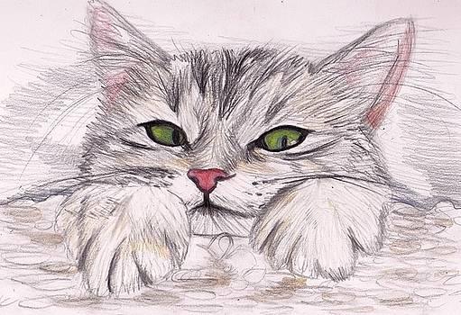 Kitten by Laura Seed