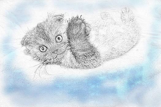Kitten Lies On Back by Tatiana Tyumeneva
