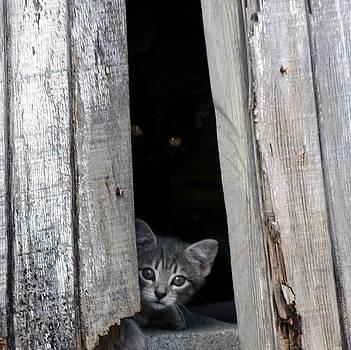 Kitten by Mario Marsilio