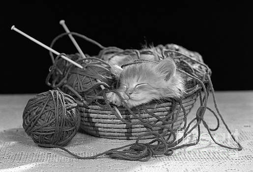 H Armstrong Roberts ClassicStock - Kitten Sleeping In Basket Of Yarn