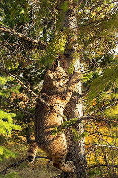 Kitten up a tree by Roy Nierdieck