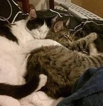 Kittens in  Love by Jess L