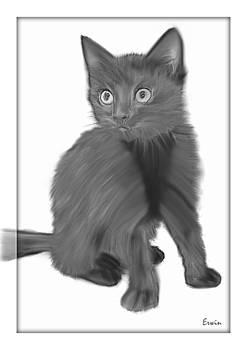 Kitty 2 by Erwin Verhoeven