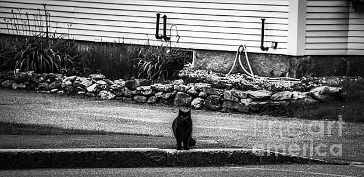 Kitty Across the Street Black and White by Marina McLain