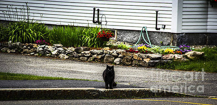 Kitty Across the Street  by Marina McLain