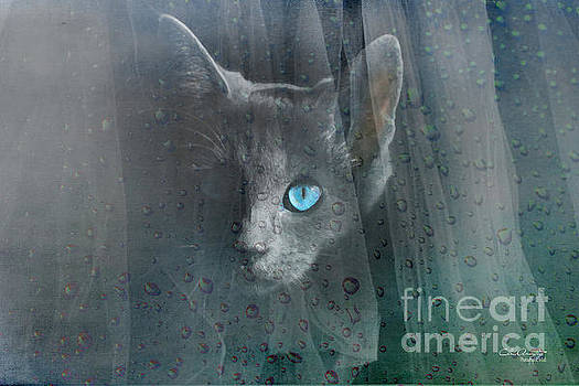 Kitty at the Window by Chris Armytage