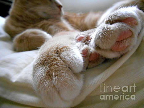 Kitty Beans by Renee Boyett