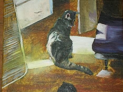 Kitty in my living room by Tara Stephanos