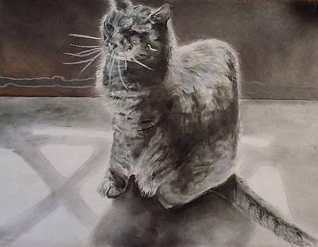 Kitty in the kitchen by Tara Stephanos