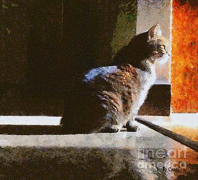 Kitty in the Light by Elizabeth Coats