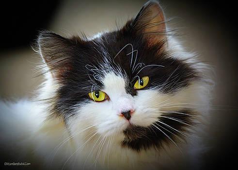 LeeAnn McLaneGoetz McLaneGoetzStudioLLCcom - Kitty Kitty