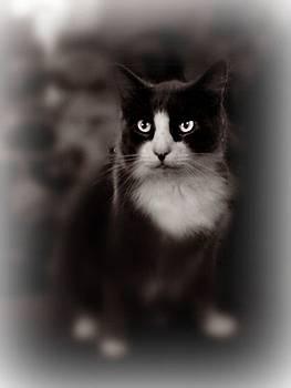 Kitty kitty by Trisha Scrivner