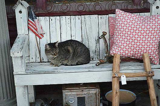 Kitty the Antique Dealer by Carolina Liechtenstein