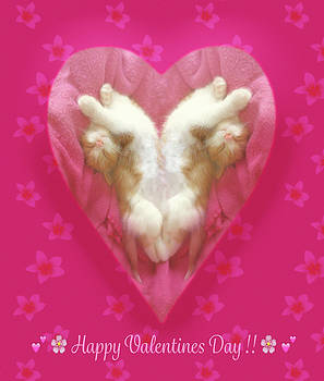 Kitty Valentine by Bonnie Follett