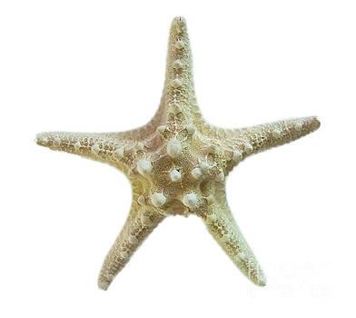 Knobby Starfish by Judy Hall-Folde