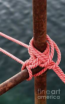 Knot on my Warf III by Stephen Mitchell