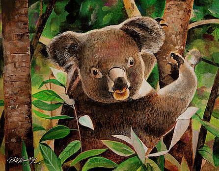 Koala Bear by Bill Dunkley