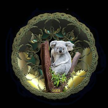 Koala by Julie Grace