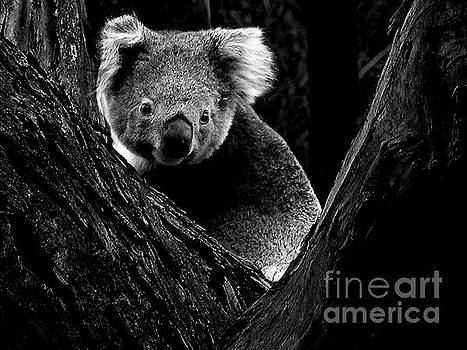 Tim Richards - Koala Park BW
