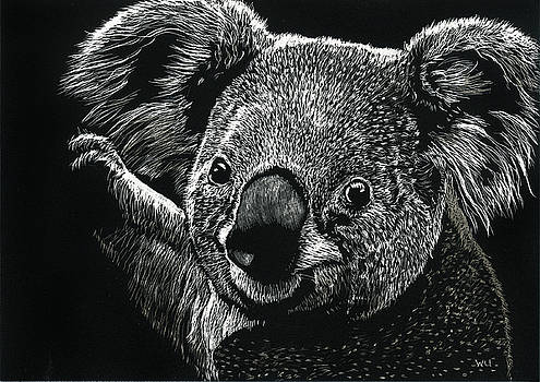 Koala by William Underwood
