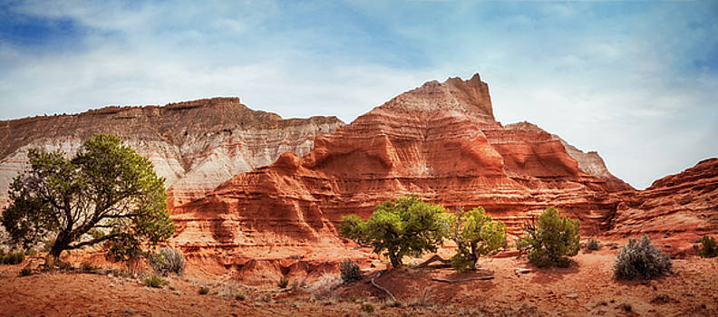 Kodachrome Park colorful desert beauty in spring. by Daniela Constantinescu