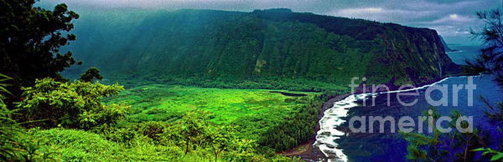 Kohala forest preserve Waipio valley look out big island Hawaii by Tom Jelen