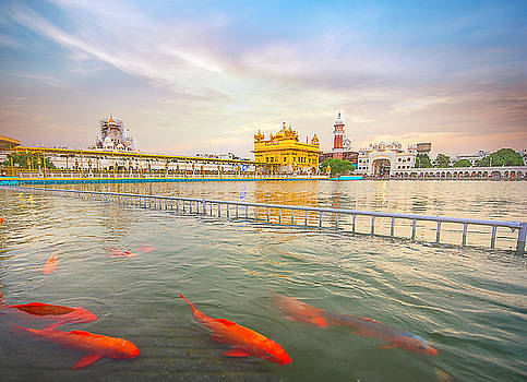 Koi Fish by Surej Kalathil