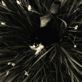 Koi in Siberian Irises by Joseph Duba