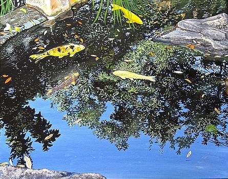 Koi in the Pond by Kelvin James