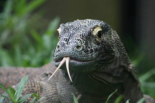 Komodo Dragon Portrait by Brian M Lumley