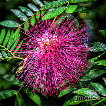 Koosh Ball by Jon Burch Photography