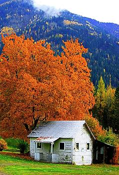 Bill Linn - Kootenay Autumn Shed