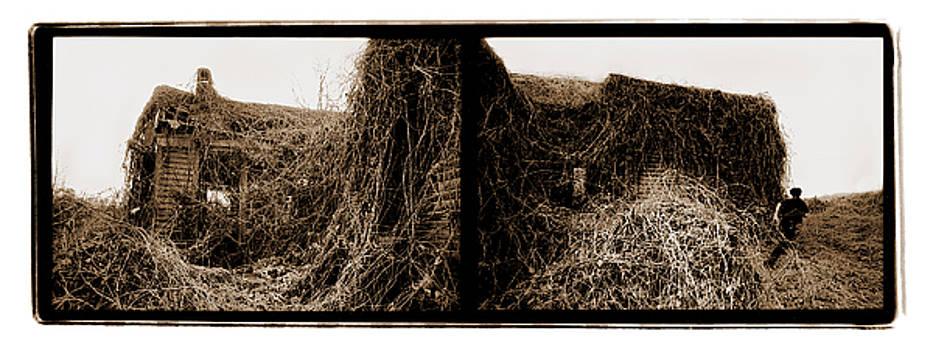 Kudzu by Mercedez Faith McCartney