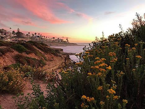 La Jolla Beach Flowers by Joe White