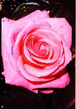 Anne-elizabeth Whiteway - La Rosa